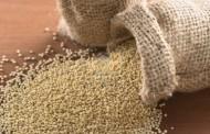 Plantean la Quinua como alternativa productiva para la escasez hídrica en Monte Patria