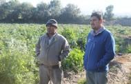 Autoridades evalúan daños provocados por heladas en provincia de Limarí