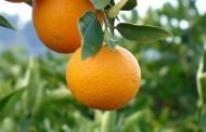 En Ovalle se realizará encuentro frutícola 2018 para productores locales
