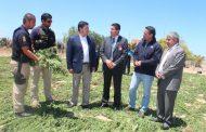 Decomisan más de tres mil plantas de marihuana de los cerros de la provincia del Limarí