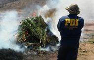 Mañana lunes la PDI lanza su Plan Cannabis en Los Vilos