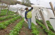 Proponen la creación de una mesa comunal en Monte Patria para enfrentar cambios climáticos