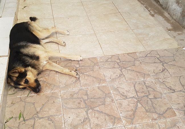 REGION: Conmovedor caso de fidelidad de mascota que visita a su amo fallecido hace 2 años