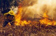 Incendio de pastizales en sector Las Sossas moviliza a Bomberos