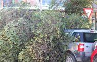 "Municipio de Ovalle por caída de árbol: ""Se produce, porque en años anteriores practicaban una poda incorrecta"""
