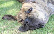 Es obligatorio: Comienza el registro nacional de mascotas en la Región de Coquimbo