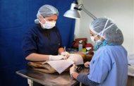 Realizarán operativos de esterilización gratuitos en Ovalle