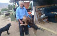 Ovalle: Perros héroes salvan de incendio a pareja de ancianos