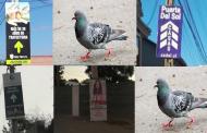 Ovalle: La Ciudad de Las Palomas