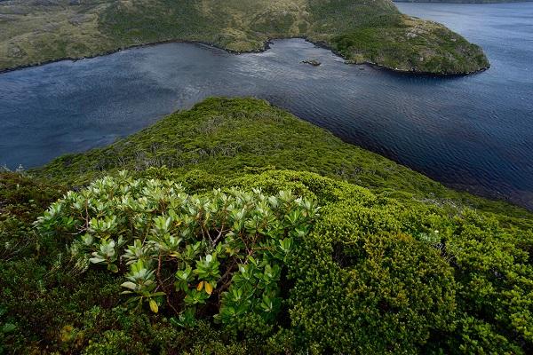 Reservas Fray Jorge y Cabo de Hornos establecen cooperación mutua