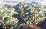 Parlamentarios piden al Gobierno decretar zona de Emergencia Agrícola