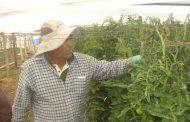 Sindicato de Pequeños Agricultores de El Palqui evalúan efecto de las heladas en sus cultivos