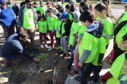 Familias ovallinas ayudan a forestación de la Avenida Costanera