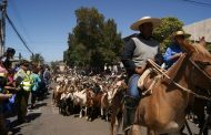 Aprueban recursos para desparasitar más de 100 mil cabezas de ganado trashumante