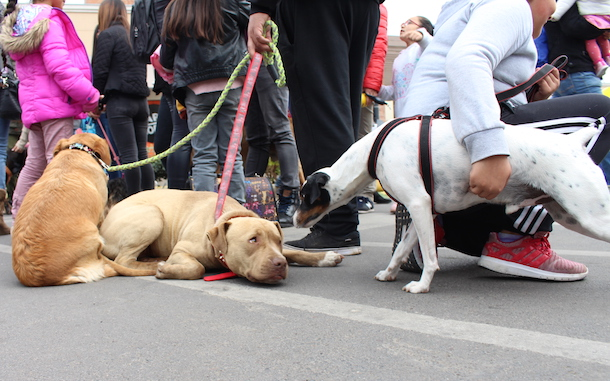 Más de 32 mil mascotas han sido registradas en la región en el primer año de obligatoriedad