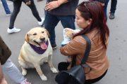 Más de 200 mascotas han sido registradas en Ovalle