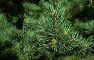 Propietarios forestales podrán obtener seguros con subvención estatal