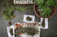 Denunció a su sobrino por tenencia de plantas de marihuana
