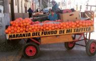 Aumento en cultivo de mandarinas y limones arroja último catastro Frutícola