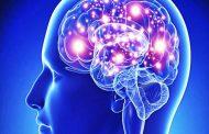 ¿Por qué aprender del cerebro?