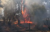 Incendio de pastizales afectó a nueve hectáreas en localidad de Punitaqui