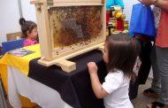 Las amenazas que acechan a las abejas de la zona
