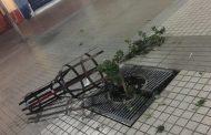 Indignante: Vuelven a romper árboles del Paseo Peatonal