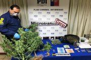 Un detenido con un kilo de marihuana tras decomiso en Villa El Palqui