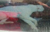 Perrito estuvo encerrado por más de media hora dentro de un auto en el Mall de Ovalle
