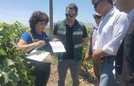 Una gran noticia para los agricultores: declaran 7 áreas libres de Lobesia Botrana en la región