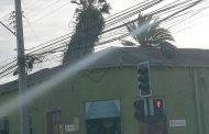 Vecinos y comerciantes preocupados por inclinación de centenaria palmera