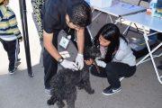 Hoy en La Bombonera vacunarán a mascotas contra la rabia