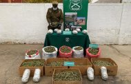 Sacan de circulación más de 38 kilos de marihuana en El Pidén de Punitaqui