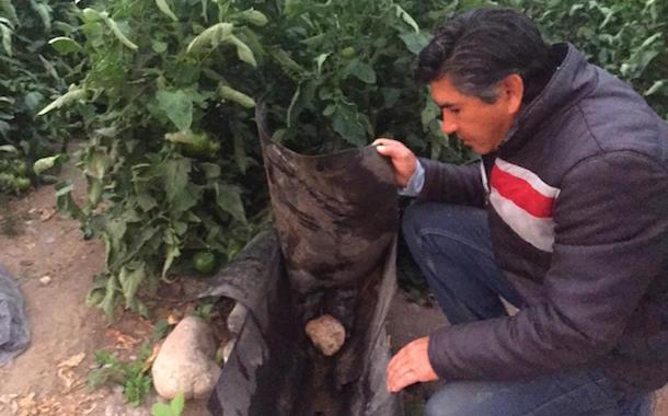 Productor de Monte Patria innova en la agricultura con sistema de riego que reutiliza el agua del río