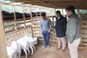 La innovadora visión de productor caprino de Monte Patria  que busca mejorar producción de quesos