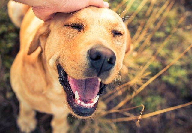 21 de julio día internacional del perro: y tú ¿vas a celebrar a tú
