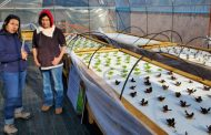 Destacan producción de hortalizas en invernadero de productores de programa Zonas Rezagadas