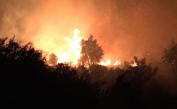Dantesco incendio forestal afecta a la localidad de El Maqui de Monte Patria