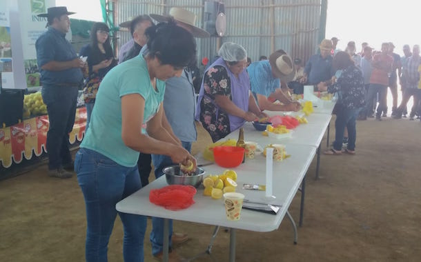 Exposición en el Ajial de Quiles: Limón de cerro  de Punitaqui se posiciona en el sector