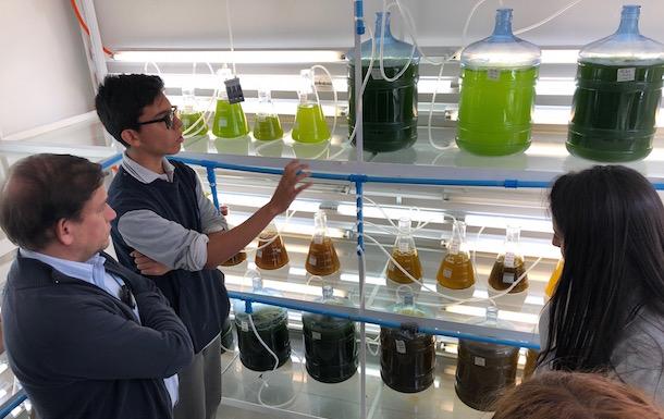 Economía: Acuicultura de ostiones como ejemplo de innovación social en Tongoy
