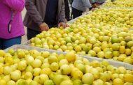 Agricultores de Punitaqui le sacan el jugo a su producción de Limones