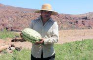 Carlos Vega, el combarbalino que desafía al secano plantando sandías y melones