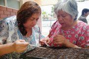 Agroecología: una alternativa para la siembra de almácigos en Punitaqui