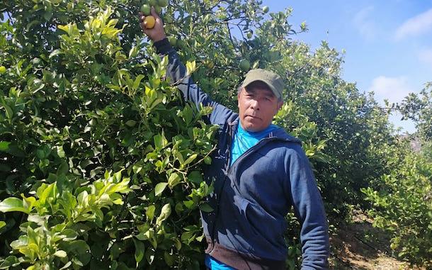 Fernando Honores, el punitaquino que cambió la minería por la rentabilidad del limón de cerro