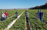 Abren convocatoria para experiencias que complementen los procesos de innovación en el agro