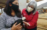 Mujeres de Punitaqui continúan con sus emprendimientos en tiempos de pandemia y sequía