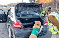 Perros antidrogas evitaron que traficantes en viaje pasaran piola