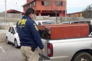 Hasta los perros fueron detenidos en carrera clandestina de galgos
