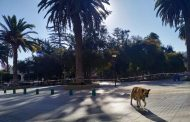Plazoletas desiertas y calles vacías: Las postales de Ovalle en Cuarentena Total