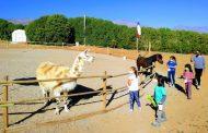 Granja Los Nogales: una oportunidad para conocer y amar a los animales